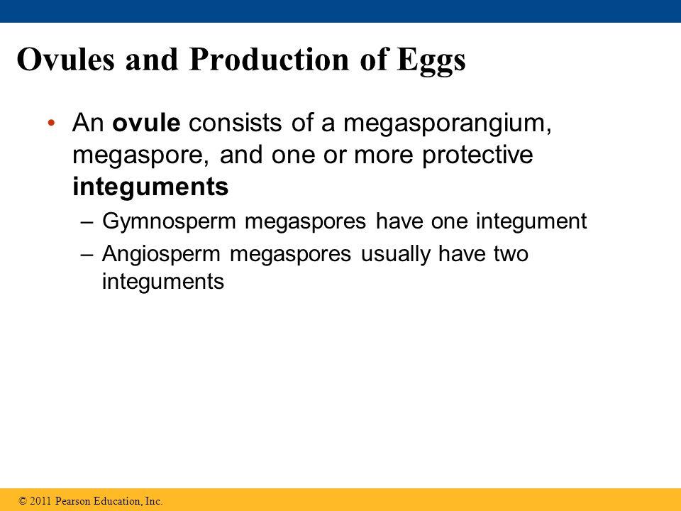 Figure 30.3-1 Immature ovulate cone Integument (2n) Spore wall Megaspore (n) (a) Unfertilized ovule Megasporangium (2n) Pollen grain (n) Micropyle