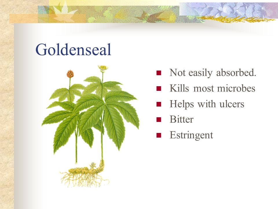 Goldenseal Not easily absorbed. Kills most microbes Helps with ulcers Bitter Estringent