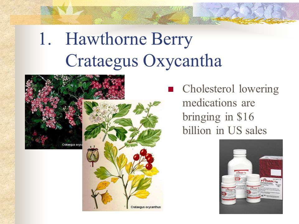 1.Hawthorne Berry Crataegus Oxycantha Cholesterol lowering medications are bringing in $16 billion in US sales