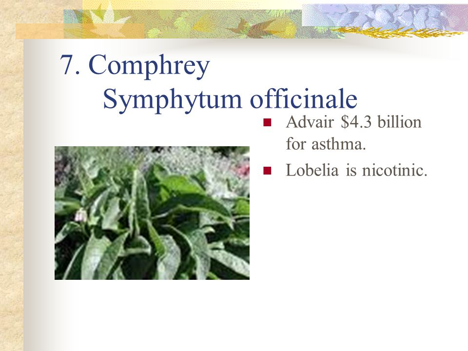 7. Comphrey Symphytum officinale Advair $4.3 billion for asthma. Lobelia is nicotinic.