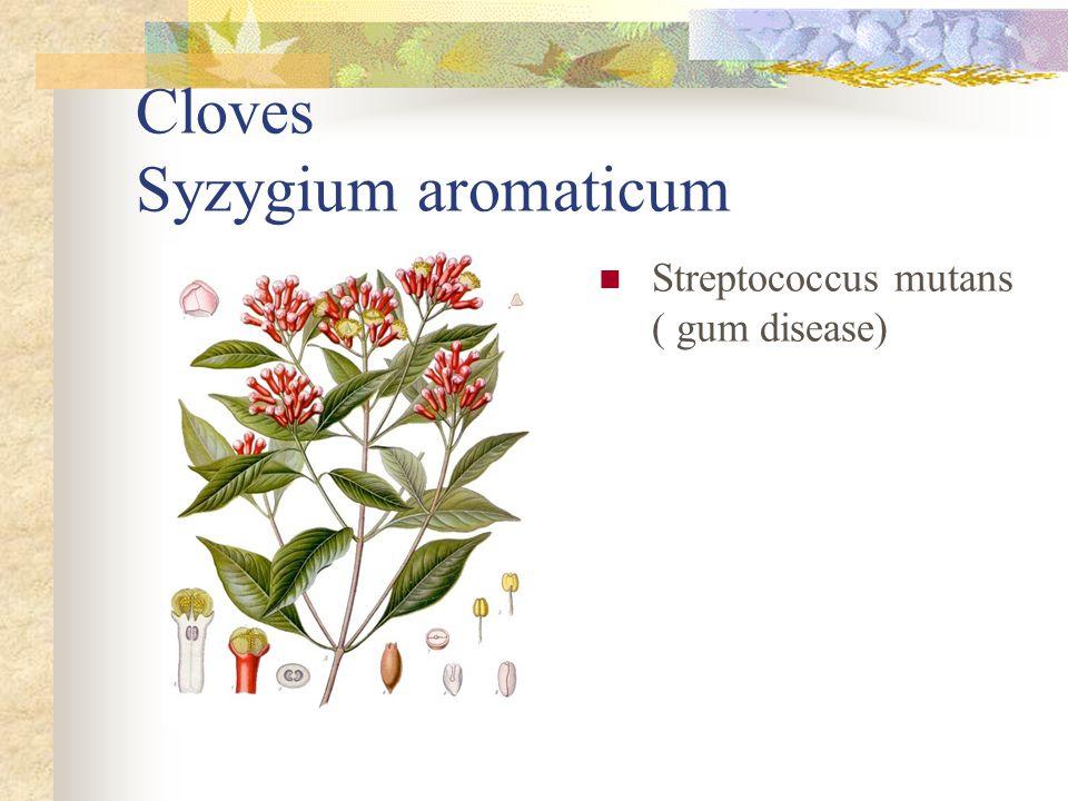 Cloves Syzygium aromaticum Streptococcus mutans ( gum disease)