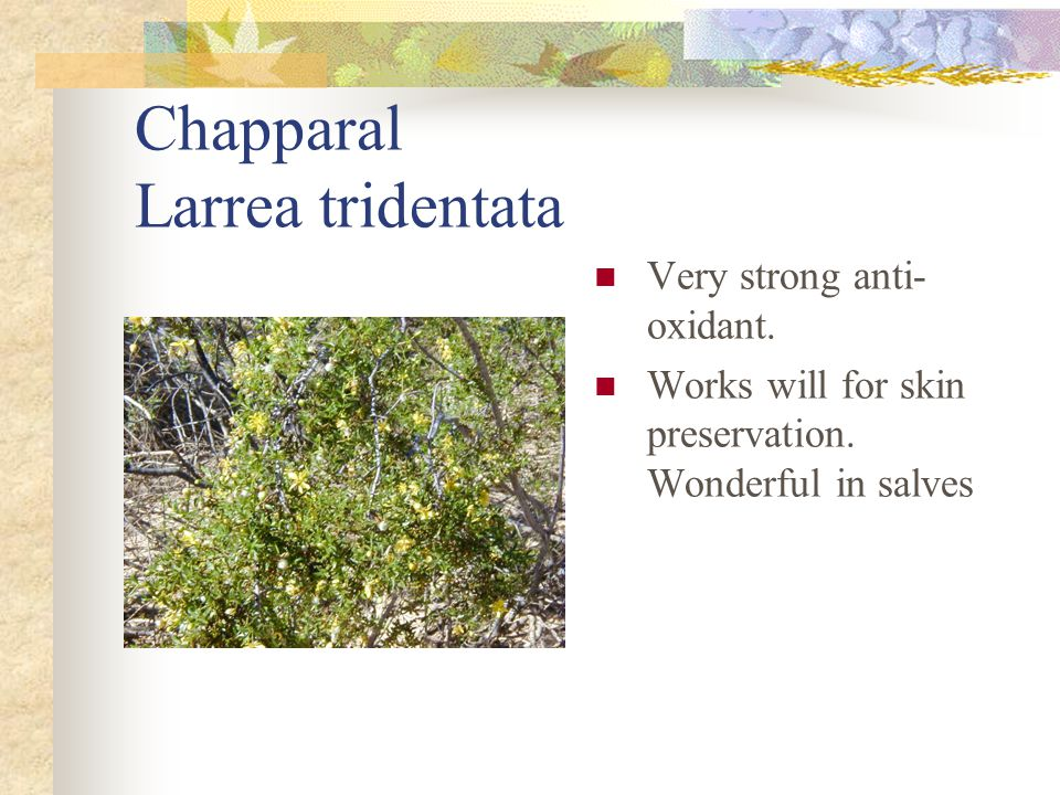 Chapparal Larrea tridentata Very strong anti- oxidant. Works will for skin preservation. Wonderful in salves