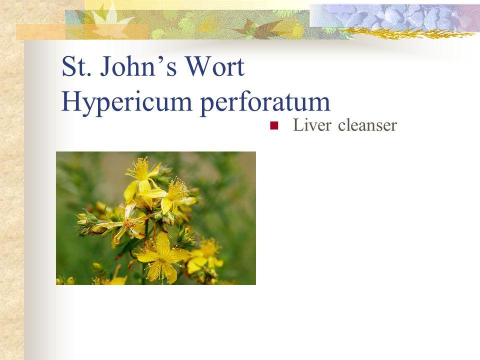 St. John's Wort Hypericum perforatum Liver cleanser