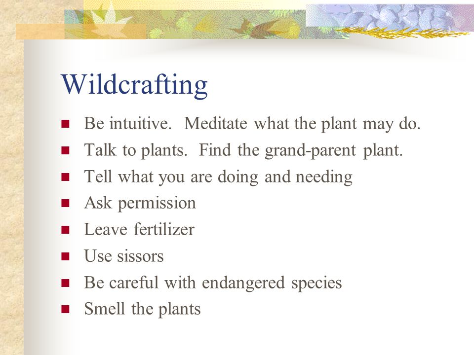 Wildcrafting Be intuitive. Meditate what the plant may do. Talk to plants. Find the grand-parent plant. Tell what you are doing and needing Ask permis