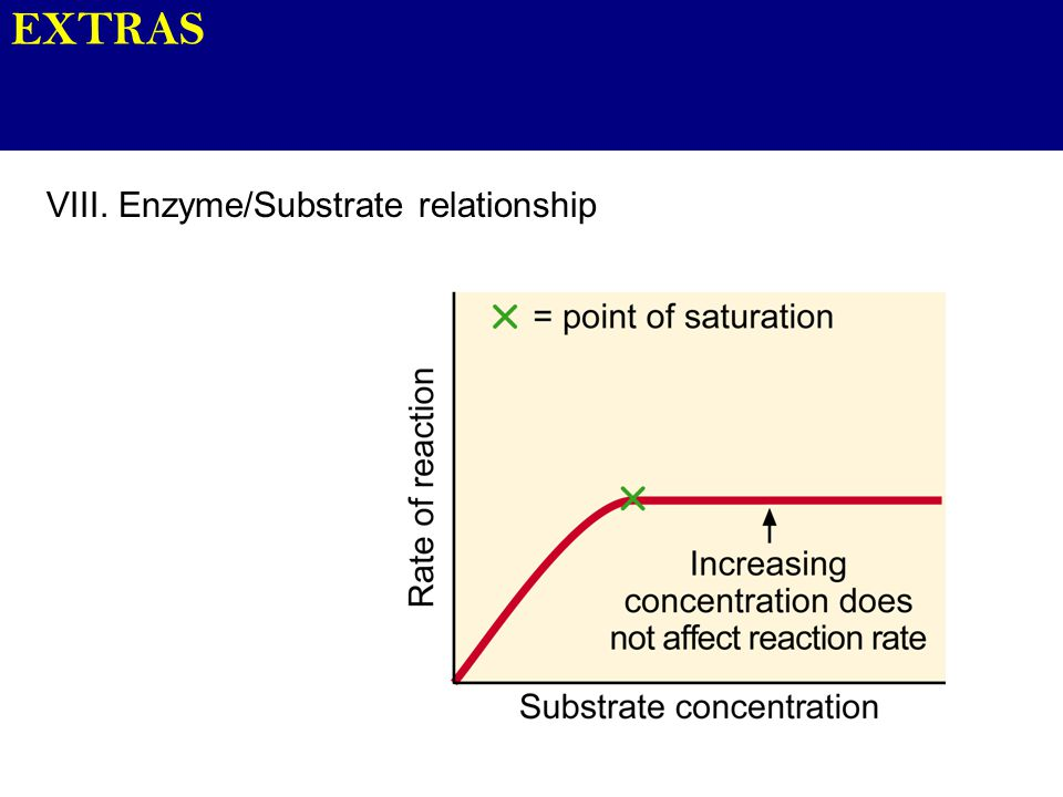 EXTRAS VIII. Enzyme/Substrate relationship