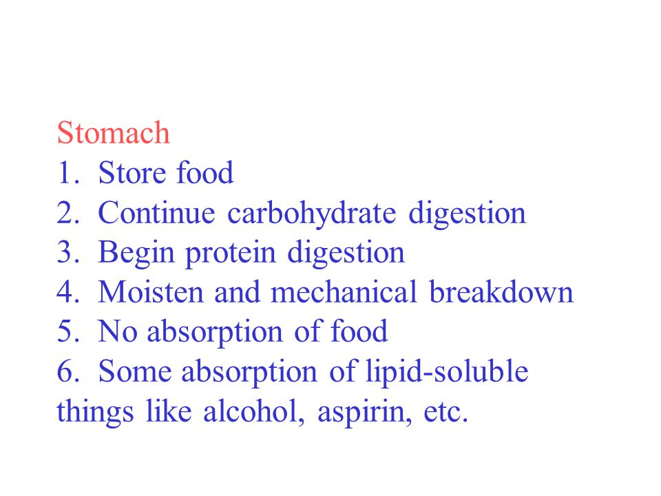 Stomach 1. Store food 2. Continue carbohydrate digestion 3. Begin protein digestion 4. Moisten and mechanical breakdown 5. No absorption of food 6. So