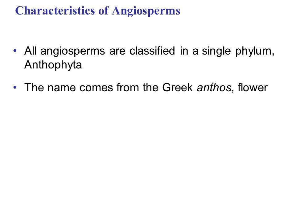 Phylum Anthophyta Characteristics Single Phylum Anthophyta