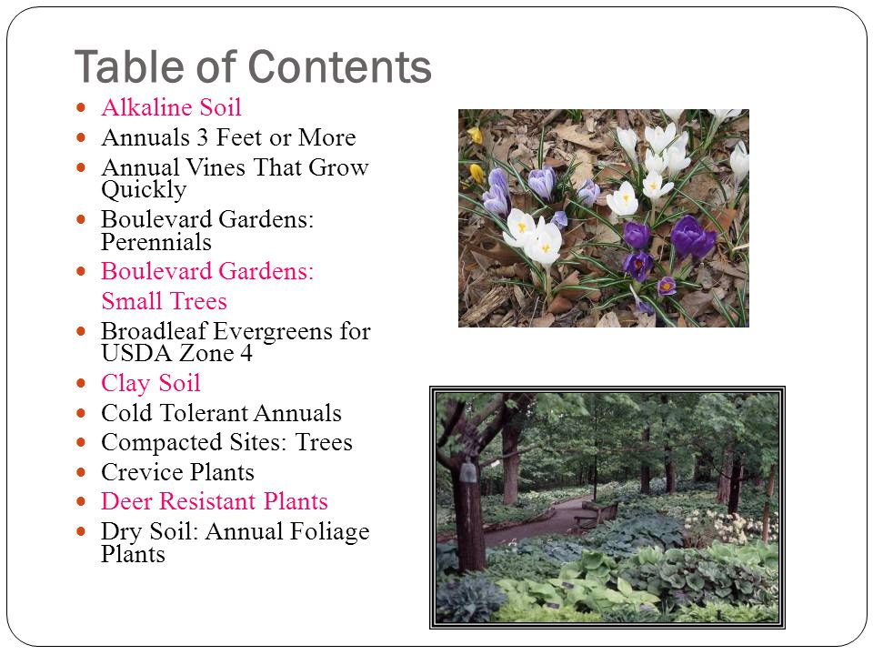 Table of Contents Alkaline Soil Annuals 3 Feet or More Annual Vines That Grow Quickly Boulevard Gardens: Perennials Boulevard Gardens: Small Trees Broadleaf Evergreens for USDA Zone 4 Clay Soil Cold Tolerant Annuals Compacted Sites: Trees Crevice Plants Deer Resistant Plants Dry Soil: Annual Foliage Plants