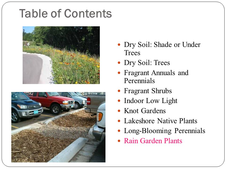 Trees for Compacted Sites Larix laricina larch, tamarack 40-70' native, deciduous conifer, yellow fall color, few pests