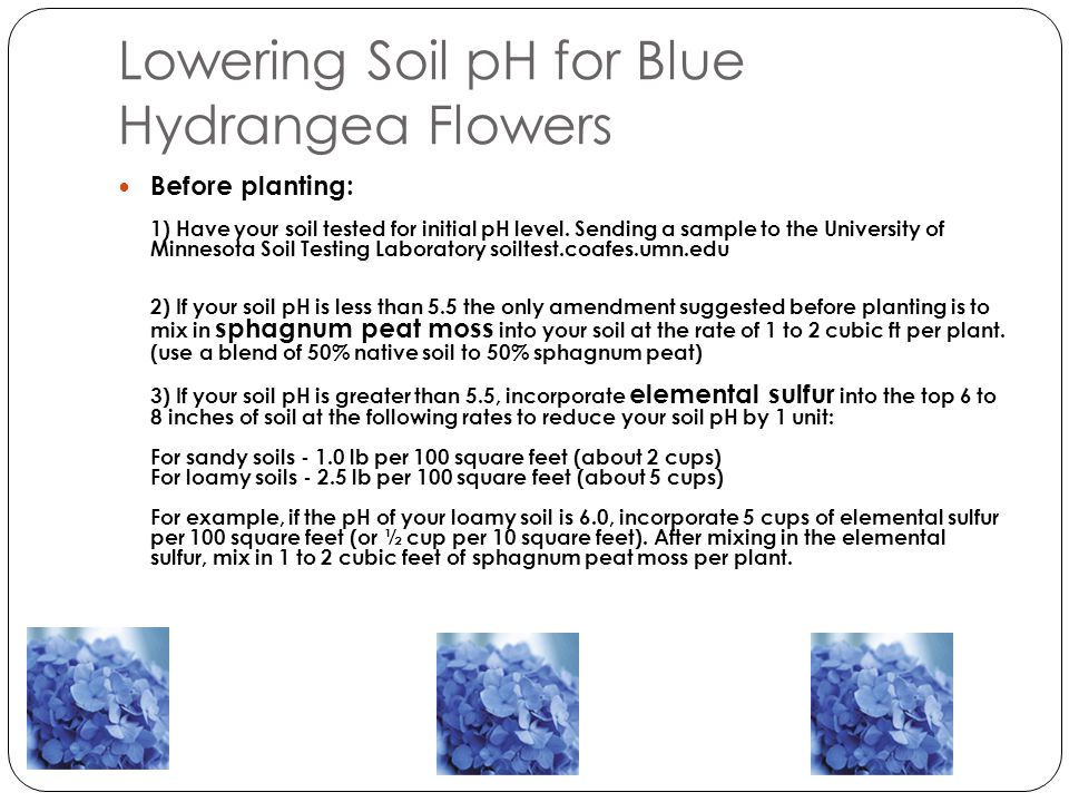 After planting: 1 ) Periodically retest your soil pH.