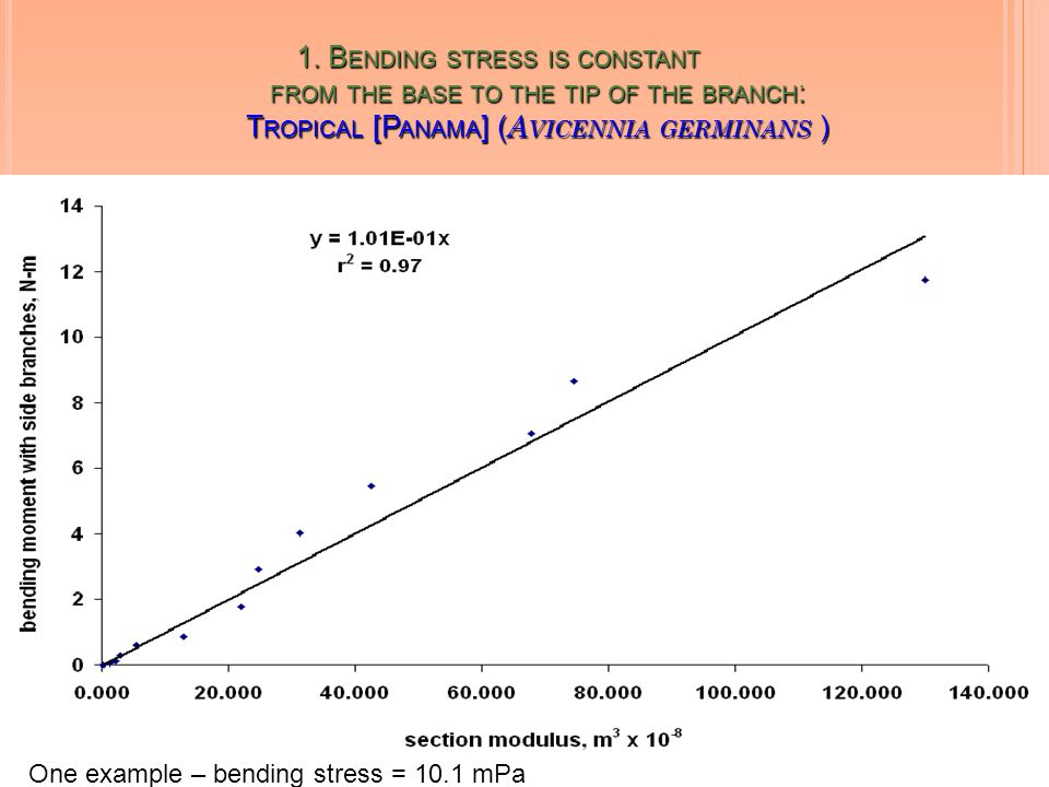 1. B ENDING STRESS IS CONSTANT FROM THE BASE TO THE TIP OF THE BRANCH : T ROPICAL [P ANAMA ] ( A VICENNIA GERMINANS ) One example – bending stress = 1