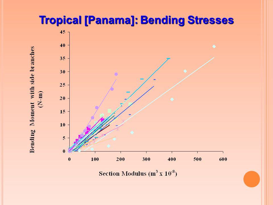 Tropical [Panama]: Bending Stresses