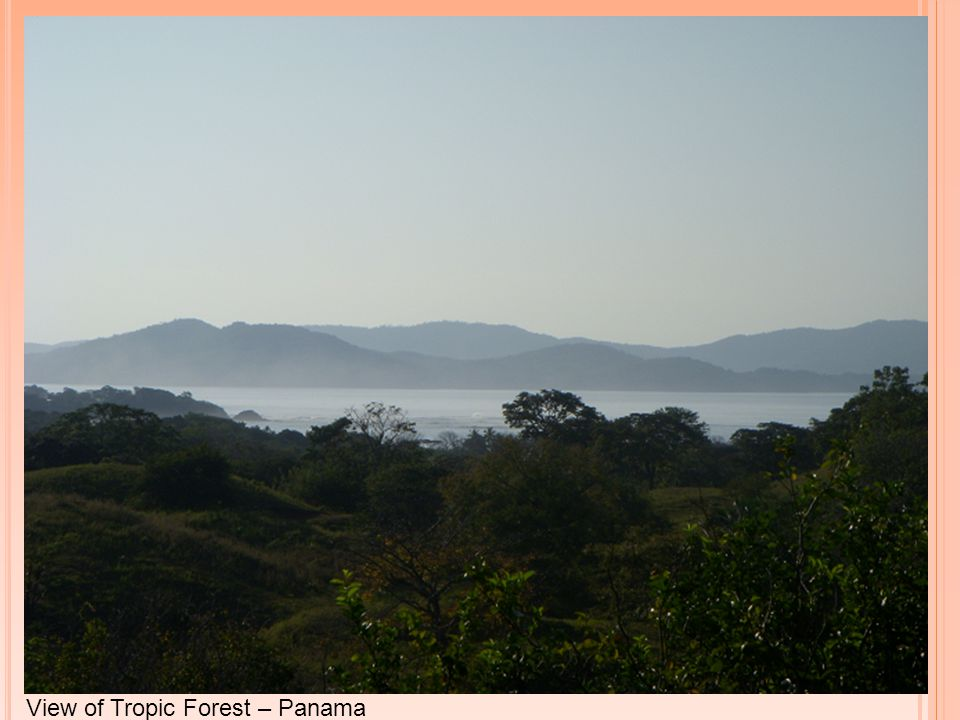 View of Tropic Forest – Panama