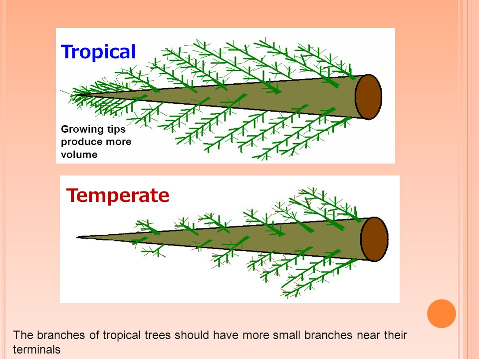 Temperate Tropical Growing tips produce more volume The branches of tropical trees should have more small branches near their terminals