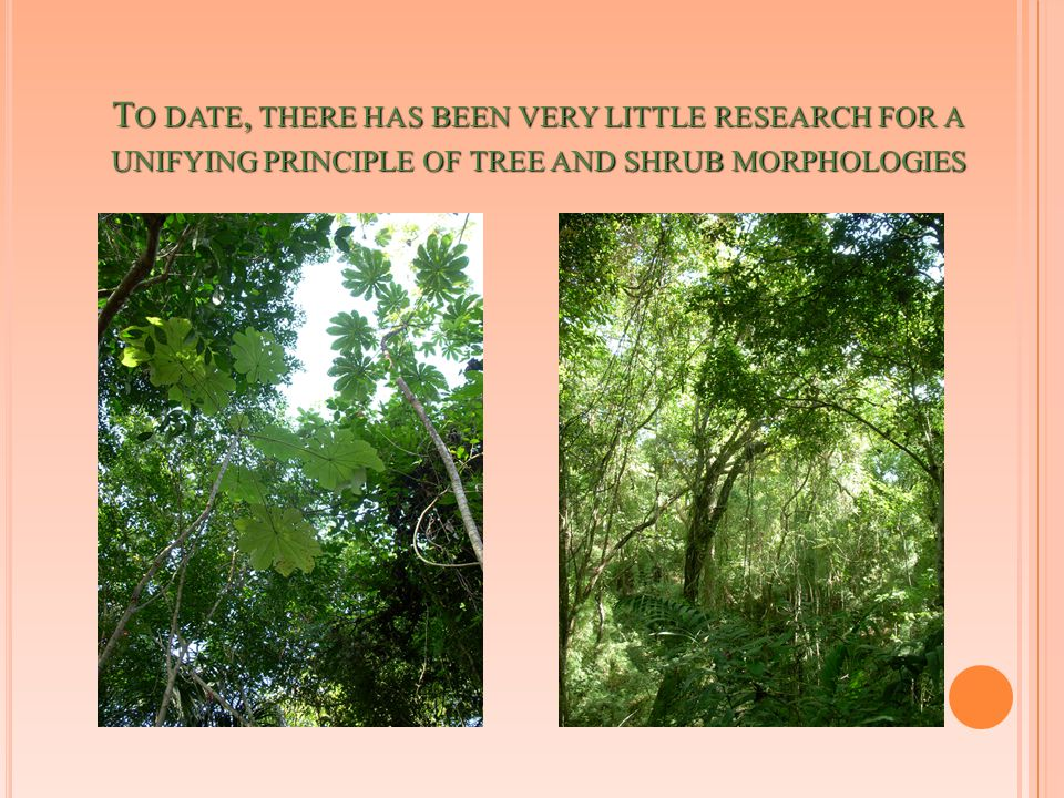T O DATE, THERE HAS BEEN VERY LITTLE RESEARCH FOR A UNIFYING PRINCIPLE OF TREE AND SHRUB MORPHOLOGIES