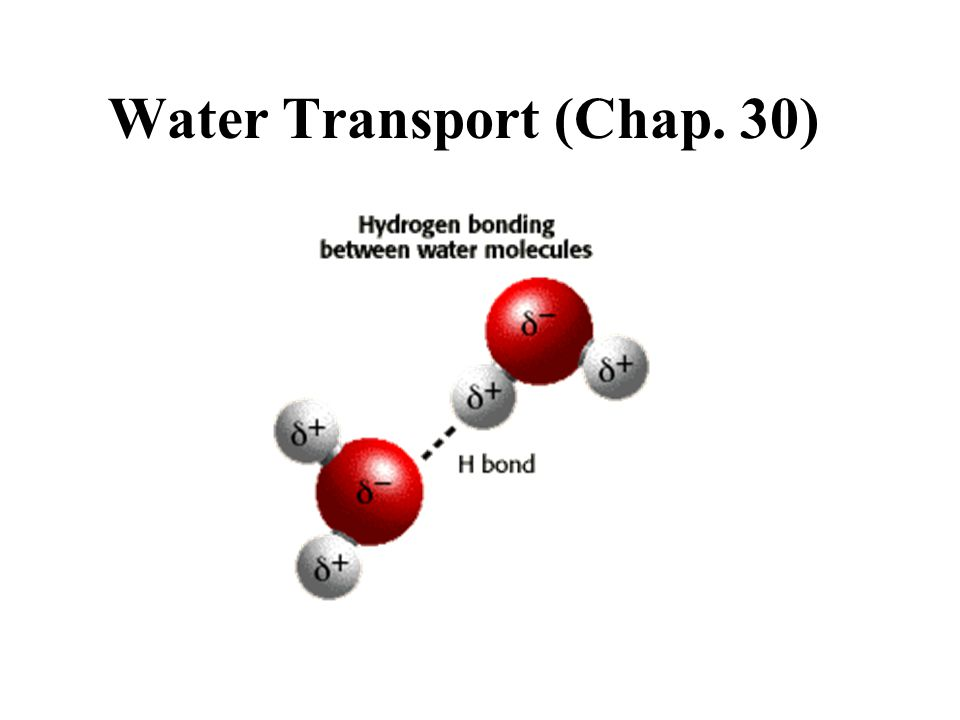 Water Transport (Chap. 30)