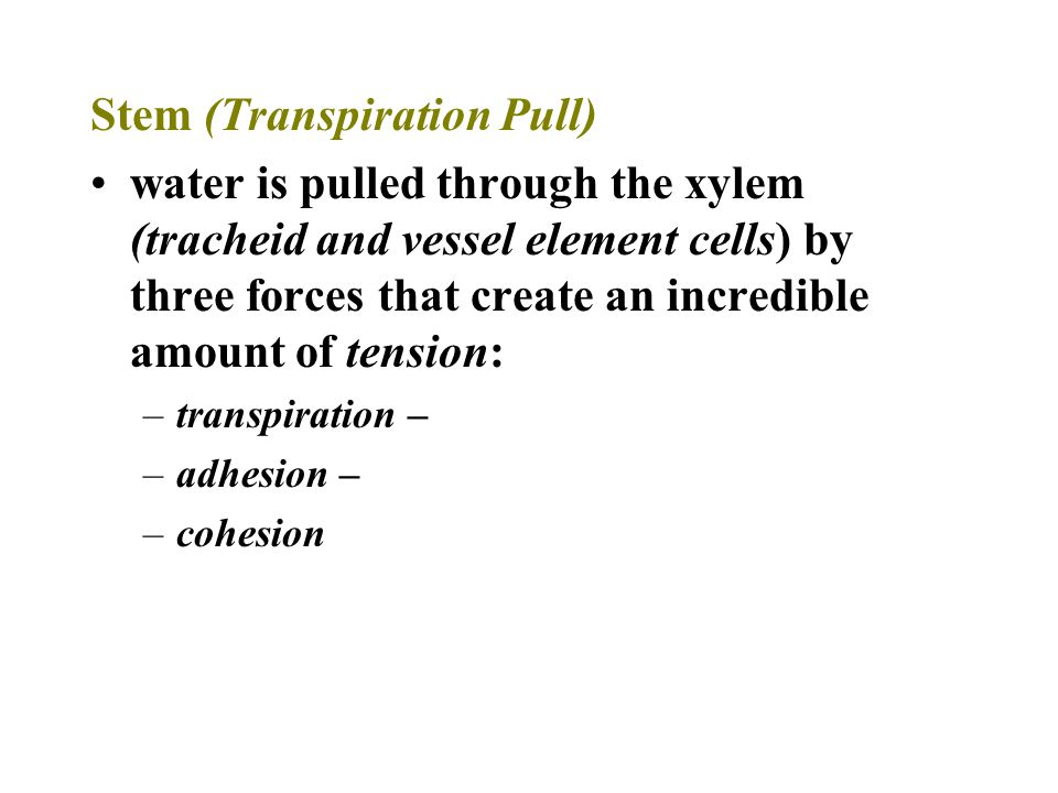 Stem (Transpiration Pull) water is pulled through the xylem (tracheid and vessel element cells) by three forces that create an incredible amount of te