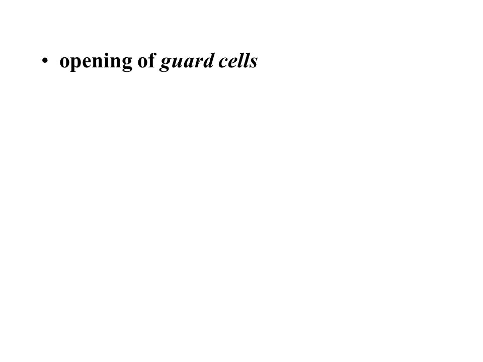 opening of guard cells