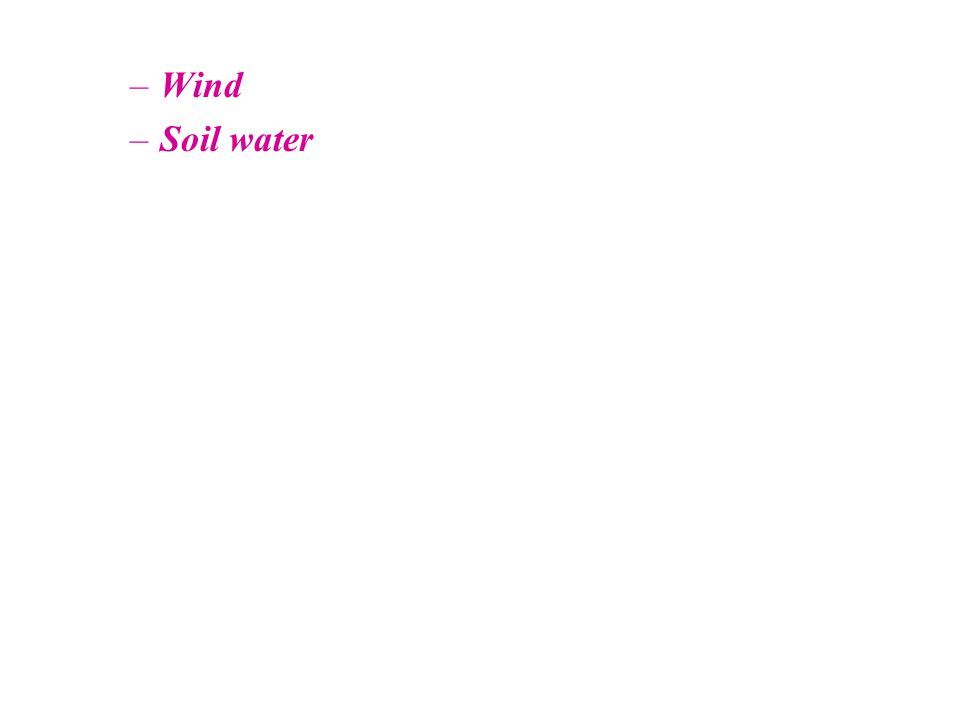 –Wind –Soil water
