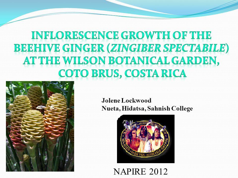 NAPIRE 2012 Jolene Lockwood Nueta, Hidatsa, Sahnish College