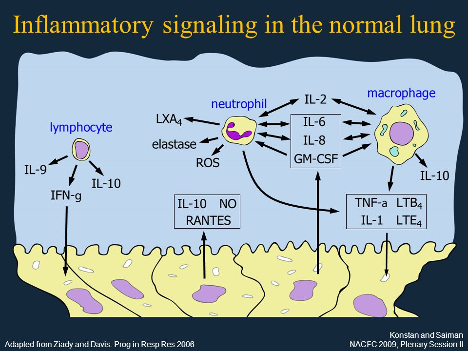 Inflammatory signaling in the normal lung Konstan and Saiman NACFC 2009; Plenary Session II Adapted from Ziady and Davis.