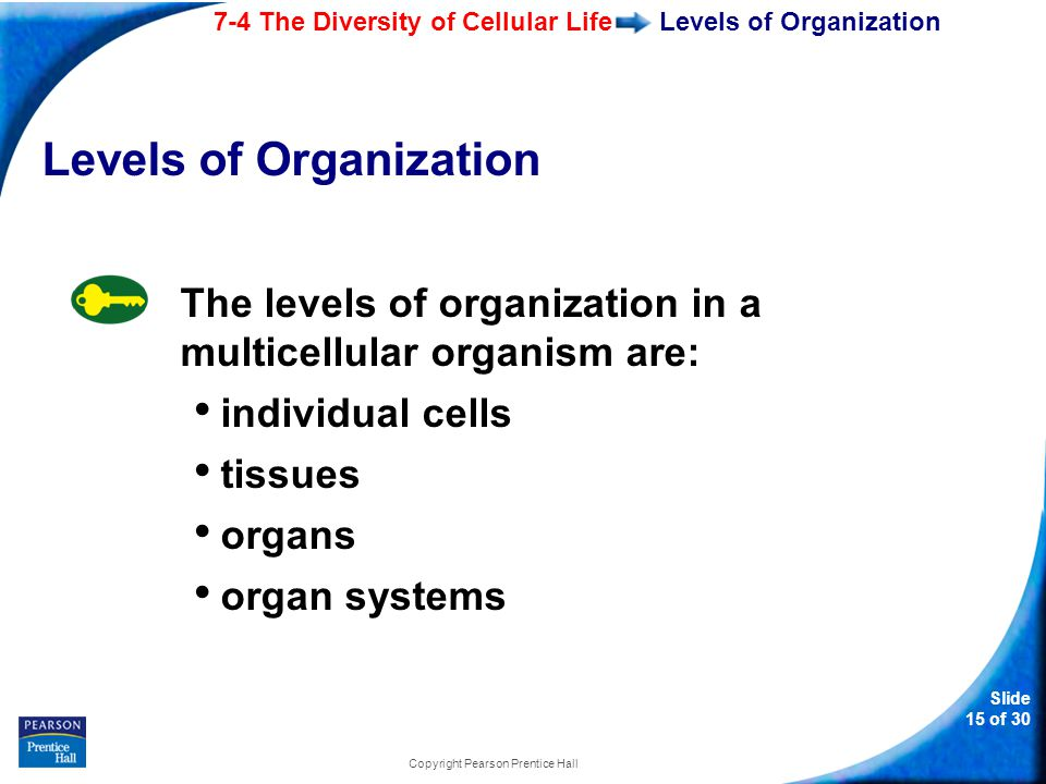 7-4 The Diversity of Cellular Life Slide 15 of 30 Copyright Pearson Prentice Hall Levels of Organization The levels of organization in a multicellular