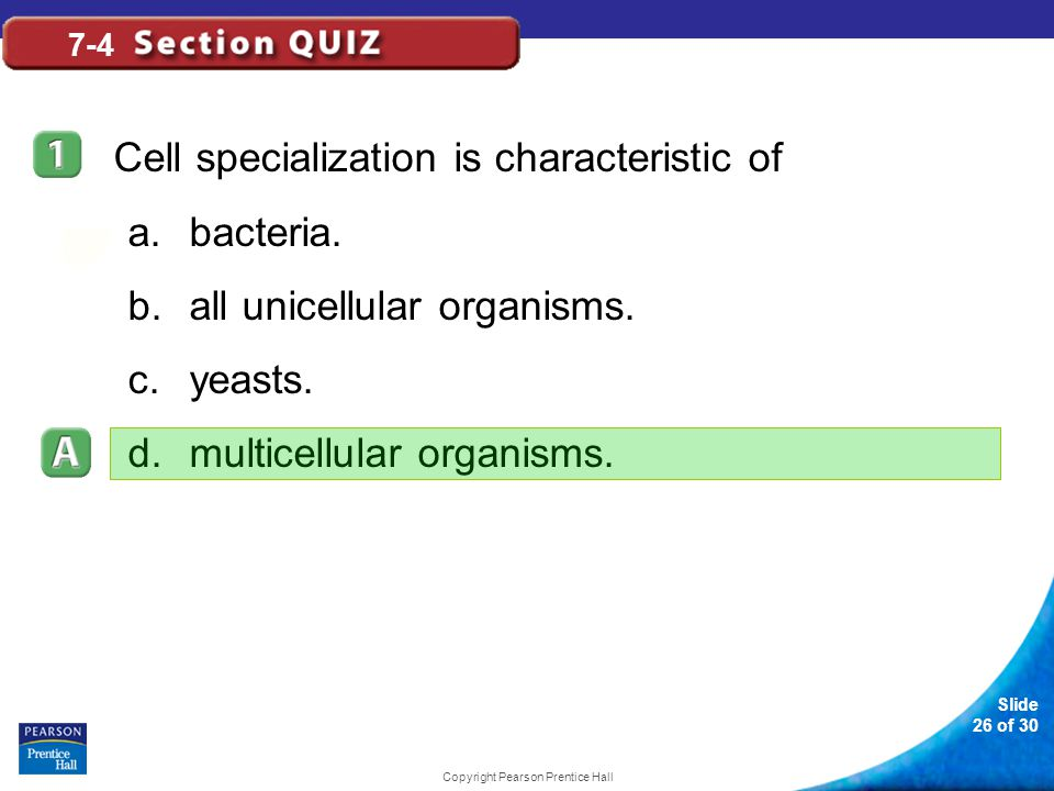 Slide 26 of 30 Copyright Pearson Prentice Hall 7-4 Cell specialization is characteristic of a.bacteria. b.all unicellular organisms. c.yeasts. d.multi