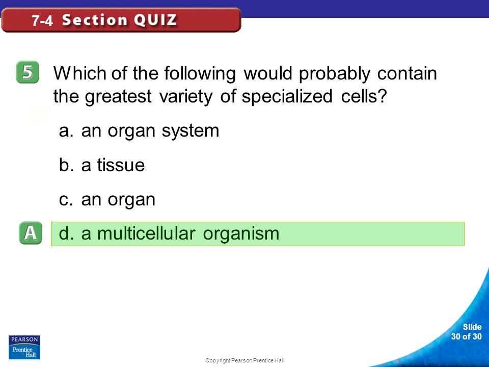 Slide 30 of 30 Copyright Pearson Prentice Hall 7-4 Which of the following would probably contain the greatest variety of specialized cells? a.an organ
