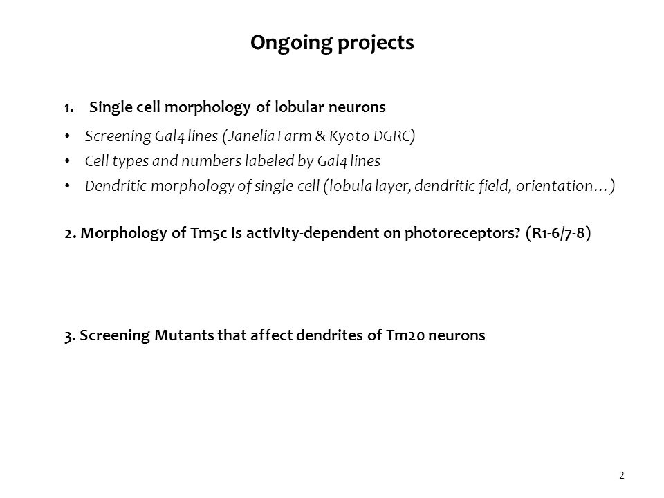 3 Downstream targets for trans-medulla neurons (Tm5/20) Lin et al., 2014 (unpublished data) A P Li Ventral view Layer Dendritic field Orientation