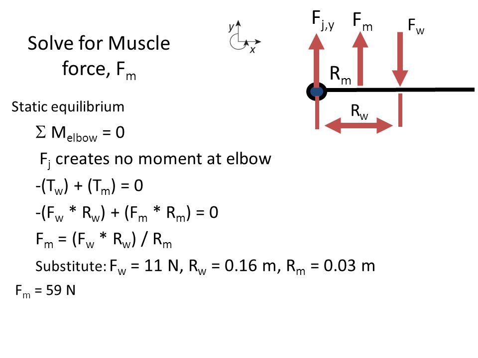Static equilibrium  M elbow = 0 F j creates no moment at elbow -(T w ) + (T m ) = 0 -(F w * R w ) + (F m * R m ) = 0 F m = (F w * R w ) / R m Substi
