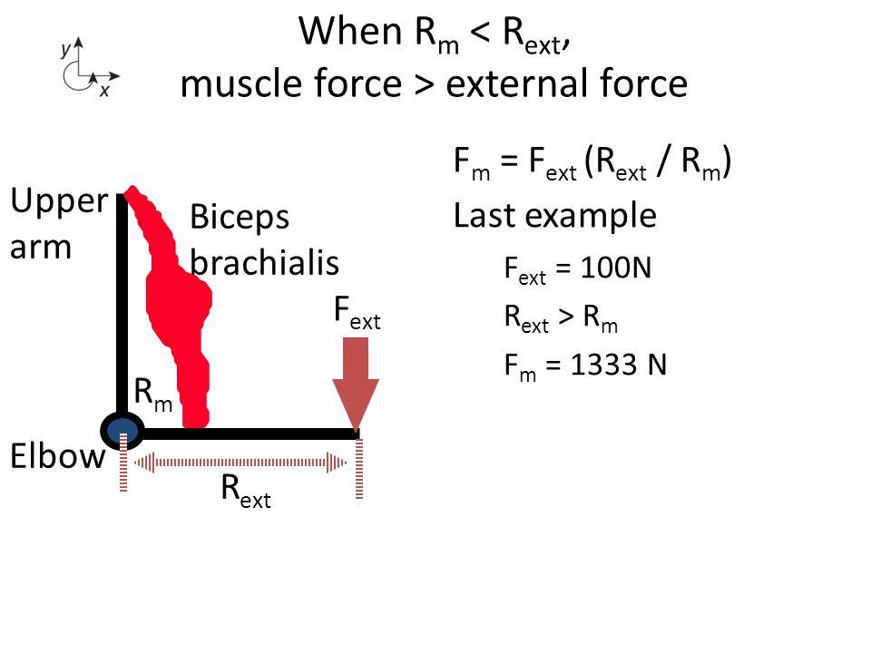 When R m external force Biceps brachialis Elbow Upper arm F ext R ext RmRm F m = F ext (R ext / R m ) Last example F ext = 100N R ext > R m F m = 1333