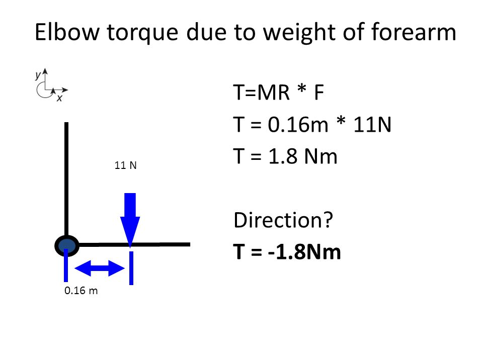 Ignore weight of forearm Information R m = 0.03 m R ext = 0.4 m Step 1: Free body diagram If a person holds a 100 N weight in their hand 0.4 m from the elbow, what is the elbow flexor muscle force.