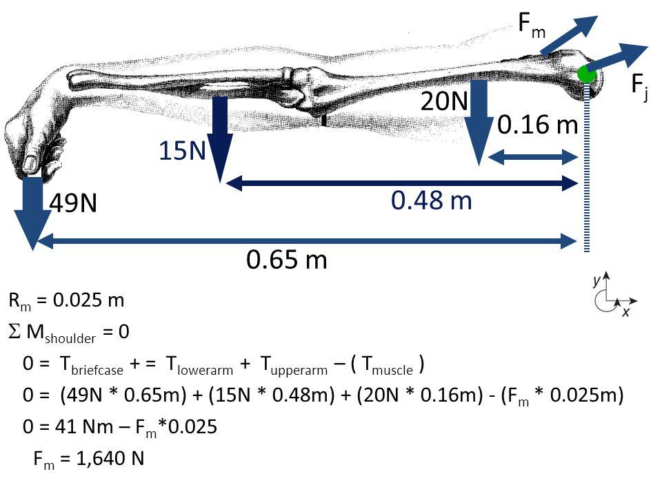 R m = 0.025 m  M shoulder = 0 0 = T briefcase + = T lowerarm + T upperarm – ( T muscle ) 0 = (49N * 0.65m) + (15N * 0.48m) + (20N * 0.16m) - (F m * 0