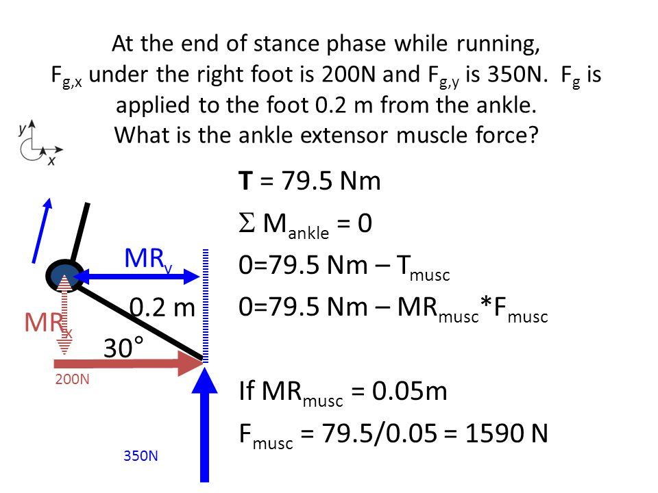 T = 79.5 Nm  M ankle = 0 0=79.5 Nm – T musc 0=79.5 Nm – MR musc *F musc If MR musc = 0.05m F musc = 79.5/0.05 = 1590 N 30° 350N 200N MR x MR y 0.2 m