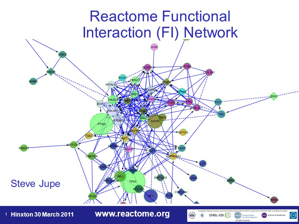 www.reactome.org Hinxton 30 March 2011 22 Analyze network functions Pathway or GO term enrichment analysis for the displayed network.
