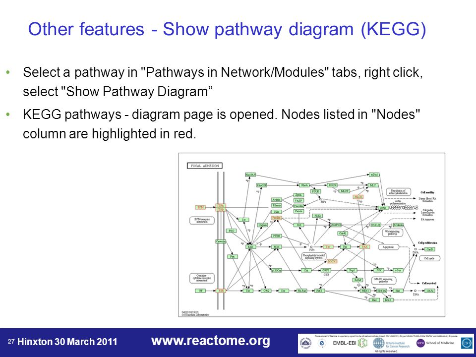 www.reactome.org Hinxton 30 March 2011 27 Other features - Show pathway diagram (KEGG) Select a pathway in Pathways in Network/Modules tabs, right click, select Show Pathway Diagram KEGG pathways - diagram page is opened.