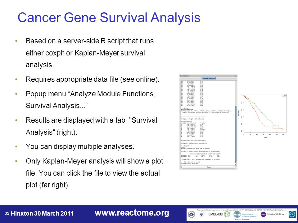 www.reactome.org Hinxton 30 March 2011 32 Cancer Gene Survival Analysis Based on a server-side R script that runs either coxph or Kaplan-Meyer survival analysis.