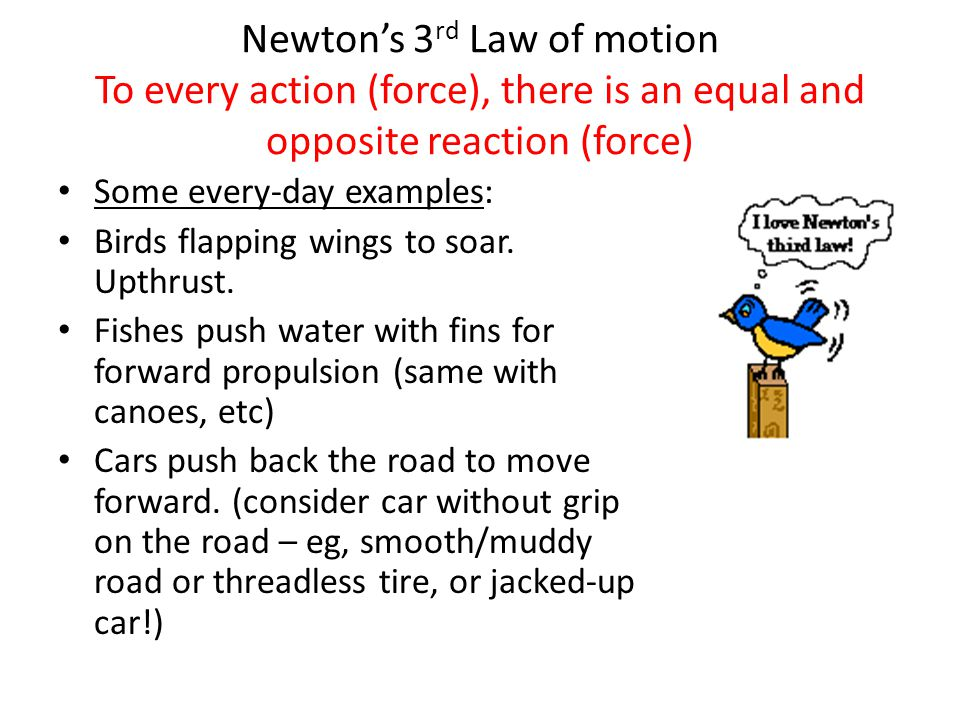 Newton's 3 rd Law of motion To every action (force), there is an equal and opposite reaction (force) Some every-day examples: Birds flapping wings to