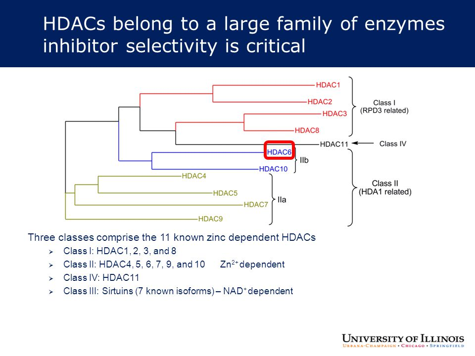 HDACs belong to a large family of enzymes inhibitor selectivity is critical Three classes comprise the 11 known zinc dependent HDACs  Class I: HDAC1,