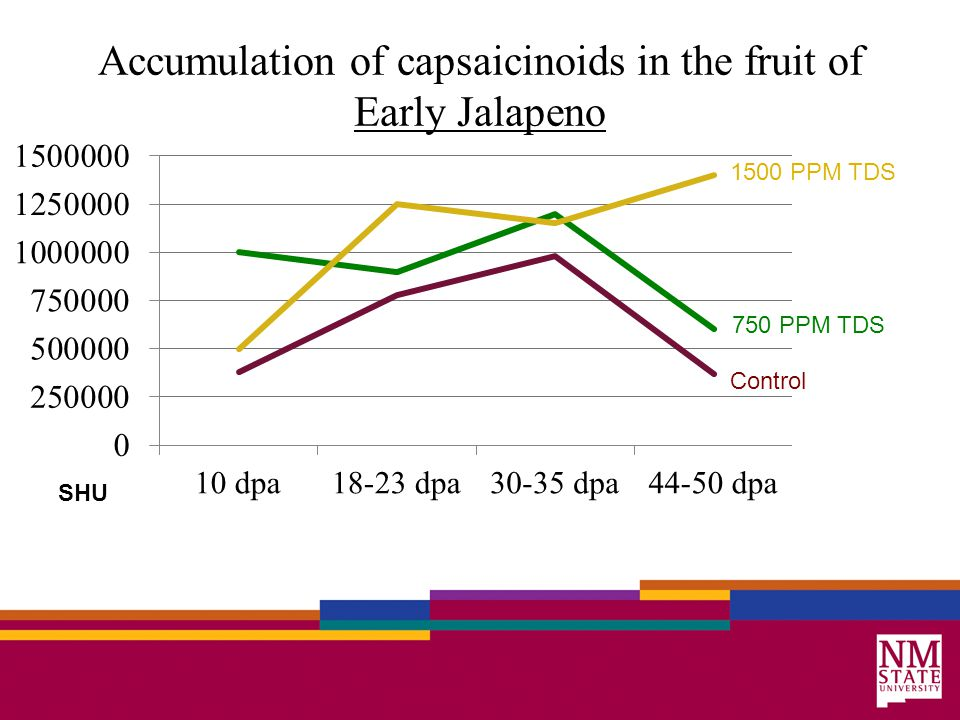 Accumulation of capsaicinoids in the fruit of Early Jalapeno 1500 PPM TDS 750 PPM TDS Control SHU