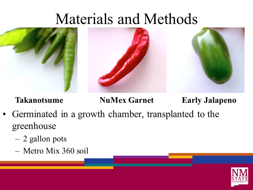 Takanotsume NuMex Garnet Early Jalapeno Materials and Methods Germinated in a growth chamber, transplanted to the greenhouse –2 gallon pots –Metro Mix 360 soil