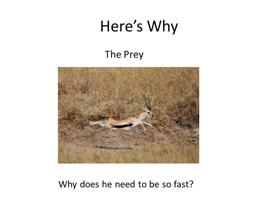 Here's Why The Prey Why does he need to be so fast?