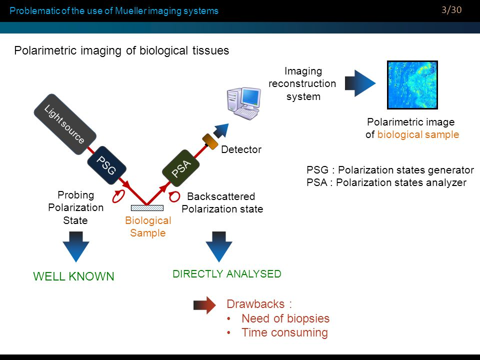 Why polarimetric imaging of biological tissues through an endoscopic fiber .