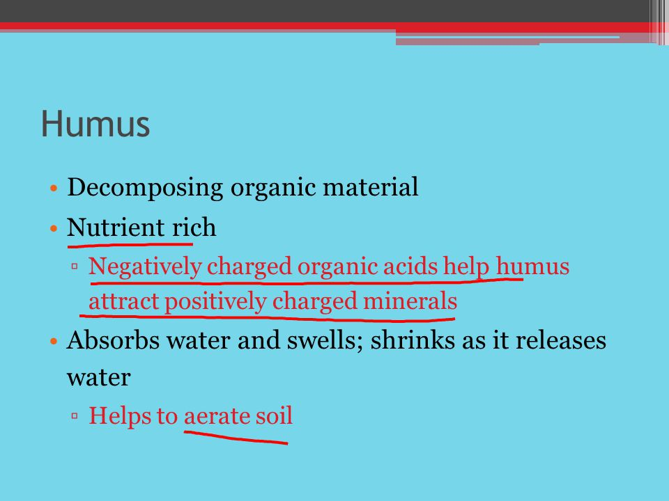 Humus Decomposing organic material Nutrient rich ▫Negatively charged organic acids help humus attract positively charged minerals Absorbs water and swells; shrinks as it releases water ▫Helps to aerate soil