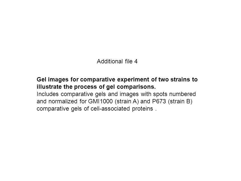 Additional file 4 Gel images for comparative experiment of two strains to illustrate the process of gel comparisons.