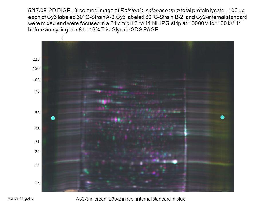 MB-09-41-gel 5 150 102 76 52 38 24 17 225 12 31 5/17/09 2D DIGE.