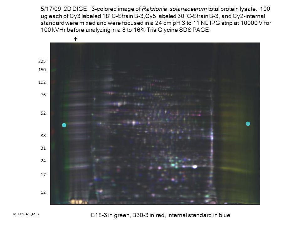 MB-09-41-gel 7 150 102 76 52 38 24 17 225 12 31 5/17/09 2D DIGE.