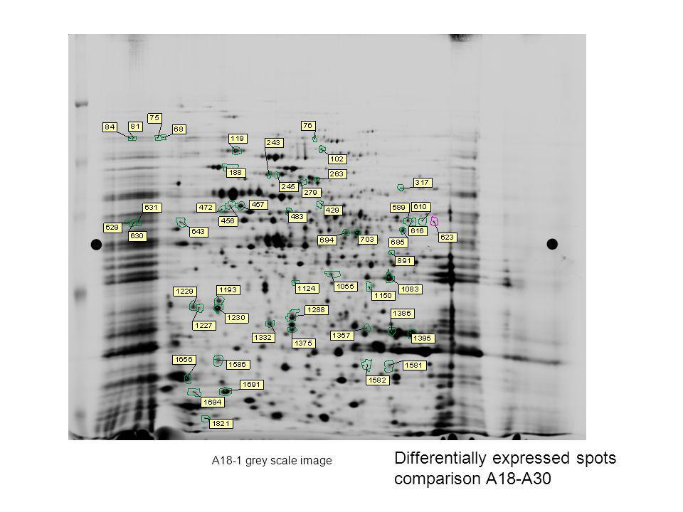 A18-1 grey scale image Differentially expressed spots comparison A18-A30