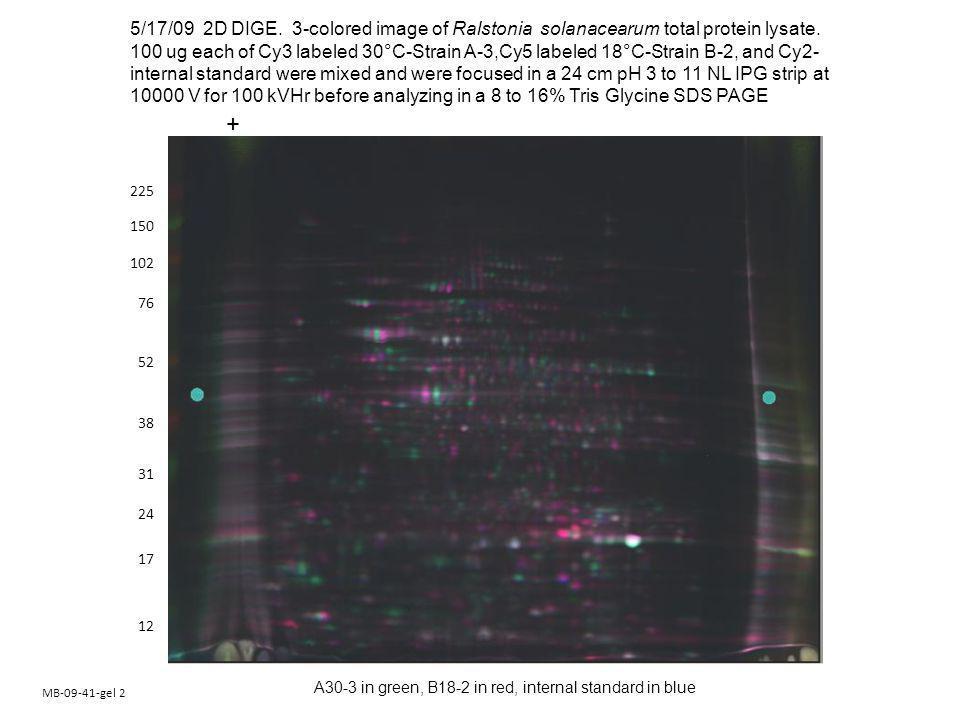 MB-09-41-gel 2 150 102 76 52 38 24 17 225 12 31 5/17/09 2D DIGE.