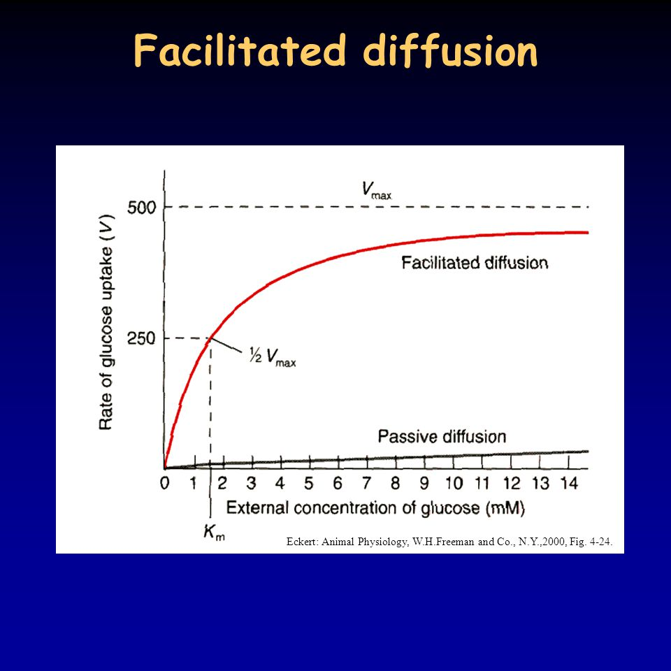 Facilitated diffusion Eckert: Animal Physiology, W.H.Freeman and Co., N.Y.,2000, Fig. 4-24.